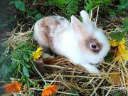 Kaninchen Damen