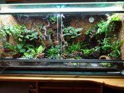 Regenwaldterrarium 120x50x60 cm,