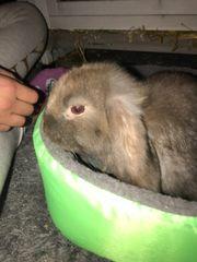 Zwei süße Kaninchen