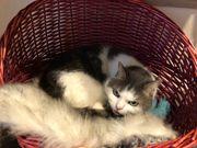 Katze Molly sucht neues Zuhause