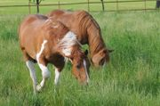 Grundstück für Pferdehaltung (