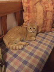 2 süße Katzenweibchen