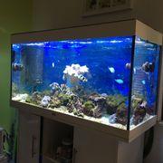 Aquarium Juwel Rio