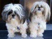 Hundesitter für zwei