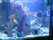 Aquarium-Würfel 50 x 50 x