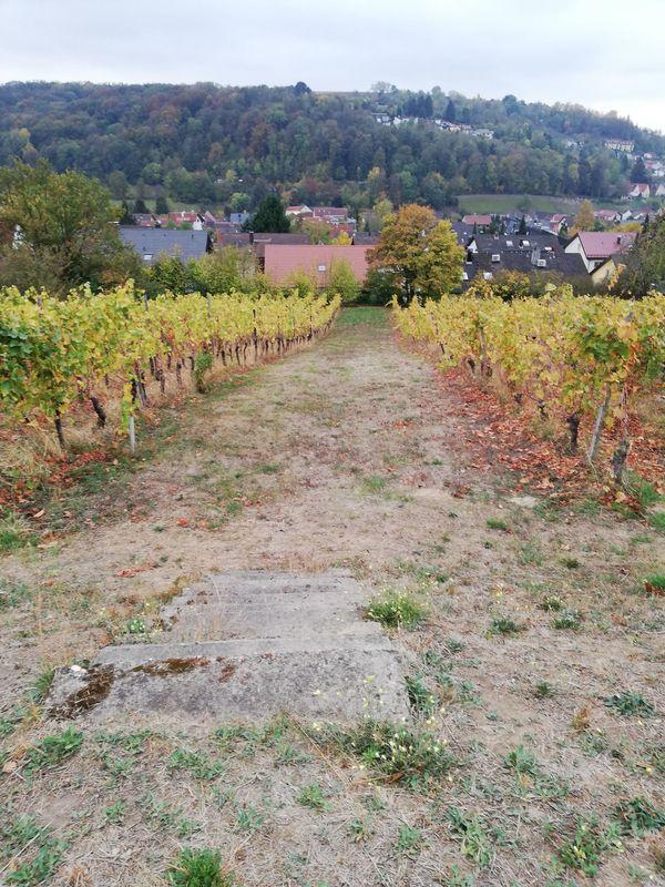 Grundstück Weingarten Katzenberg