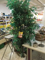 Kunststoff Pflanze Plastik