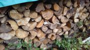 Brennholz abgelagert, ofenfertig