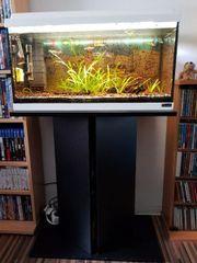 Aquarium 60er mit