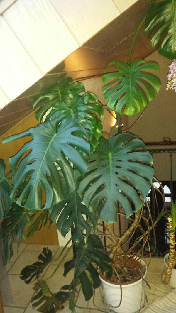 Pflanzen In Mutterstadt Pflanzen Kaufen Und Verkaufen Uber Private