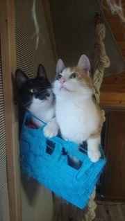 Katy und Stella suchen ihr