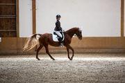 Biete Reitbeteiligungspferd 2-3x die Woche