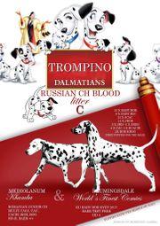 TOP-Dalmatinerwelpen aus