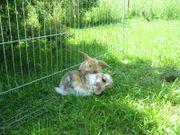 Zauberhafte Kaninchen-Babys!!!