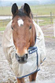 pferd sucht menschen