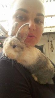 Kaninchen Mädchen