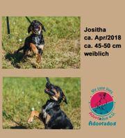 Jositha ich bin ein hundeclown