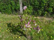 Suche Garten Wiese Baumwiese Streuobstwiese