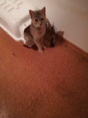 Normal Hauskatzen