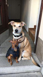 Hundesitter für 2,