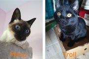 Katzenpärchen Mitsu und Troll suchen