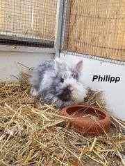 Kaninchen aus dem Tierschutz