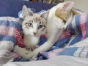 LULU OLIVE - TraumKätzchen suchen gemeinsam