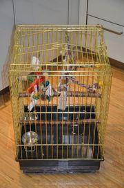 Papageien Käfig, Papageienkäfig,
