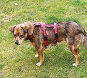 Rhea süßes grinsendes Hundemädchen ist