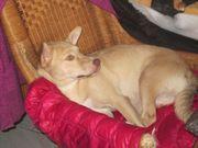 Abby 2 Jahre altes Hundemädchen