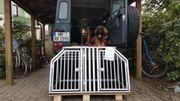 Schmidt Hundetransport- Doppelbox