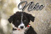 schenken Sie Niko die Familie
