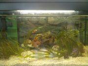 komplettes Meerwasser Aquarium