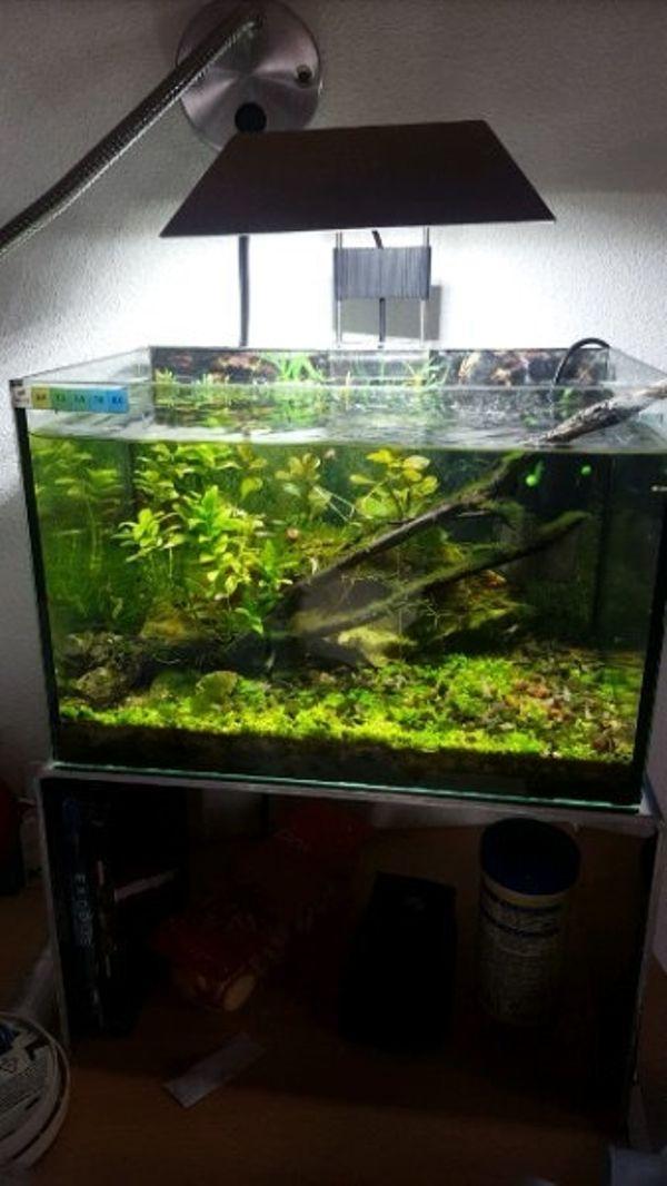 Kampffisch kleinanzeigen kaufen verkaufen bei deinetierwelt for Kampffisch aquarium