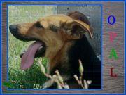 Pflegehund *OPAL* ruhig,