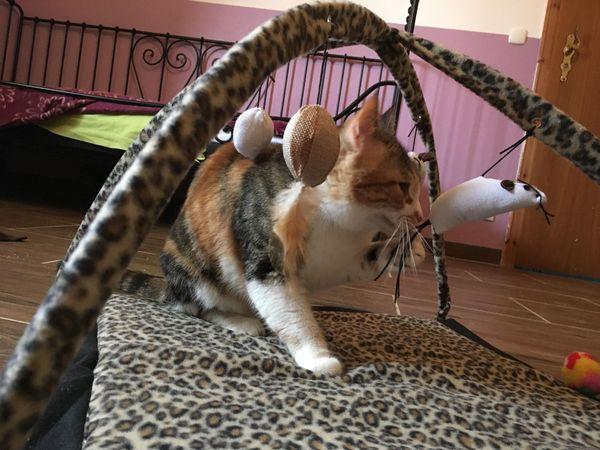 Tami - verschmuste Glückskatze sucht zu Hause - Schliersee - MischlingskatzejungTami ist super, verschmust, verspielt, sozial, und sie hat einen zum Fressen gern. Sie ist ca. 1 Jahr alte und sucht ein zu Hause mit Katzengesellschaft, Jungs bevorzugt.Sie kommt bei uns mit allen Katzen problemlos zurecht - Schliersee