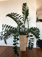Pflanze im Korbtopf