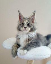 Tierbetreuung für Kleintiere und Katzen