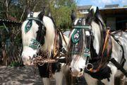 Jagdwagen Kremser für Pferde ab