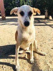 Mischlingshund Mirtos sucht ein liebevolles