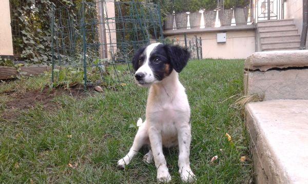 Piccolina, Hündin, geboren » Hunde
