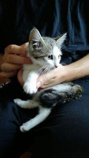 Babykatzen und erwachsene
