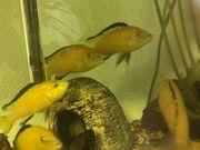Aqurium Fische