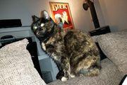 Katze kastriert stubenrein
