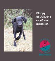 Floppy aktiver Welpe sucht sein
