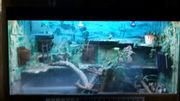 Wasseragme und terarium