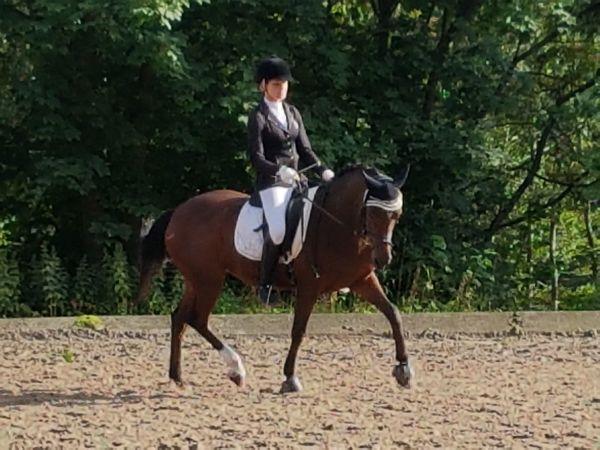 Traumpony 3 in » Pferde