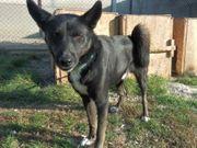 AZIR Idealer Familienhund - braucht Abwechslung