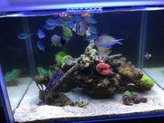 Reserviert - Meerwasser Fische Fischbesatz mit