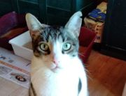 Katze Flay sucht ein Zuhause